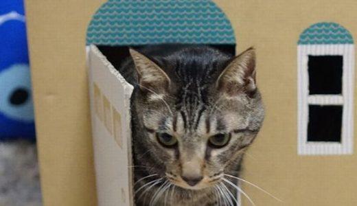 猫砂の段ボール箱がハウスに変身