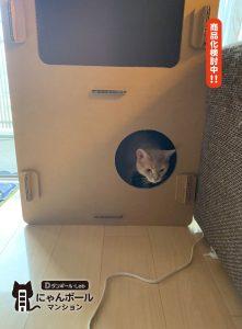 猫ちゃん用ダンボールハウス